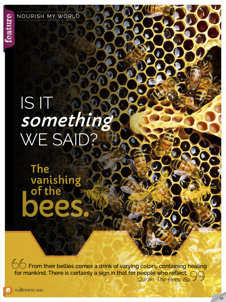 Vanishing bees – is it something we said?